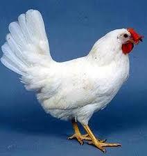 Rüyada Tavuk Görmek, Tavuk Yemek